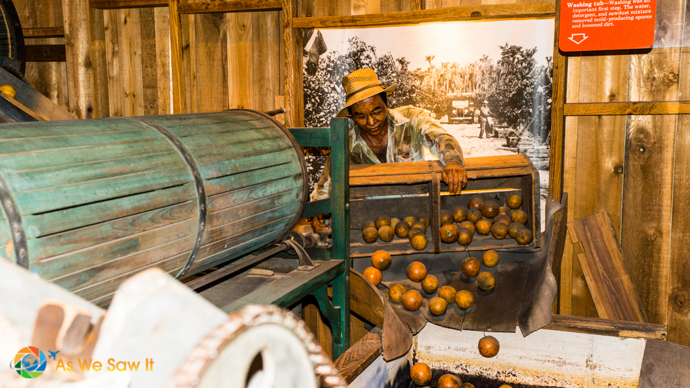 Very interesting display showing how oranges were harvested, sorted and made ready for market.  First a bath.