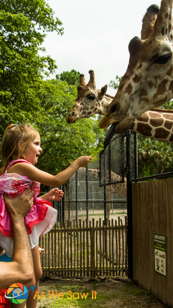 Feeding the Giraffes at the Naples Zoo.