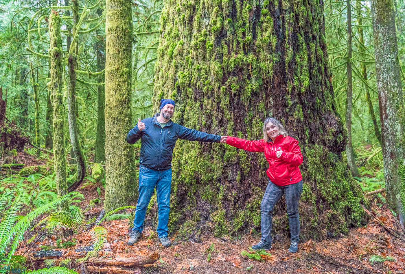 Dan & Linda stand in front of a tree in Olympic National Forest