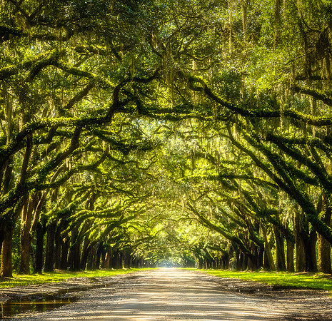 Wormsloe Plantation – Savannah, Georgia