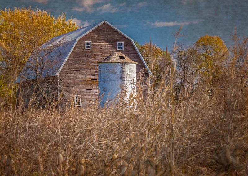 Old farmstead with dry corn