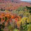 Fall View Through Trees
