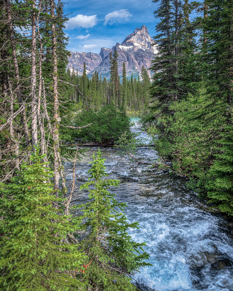 Mountain stream in Yoho National Park, Canada