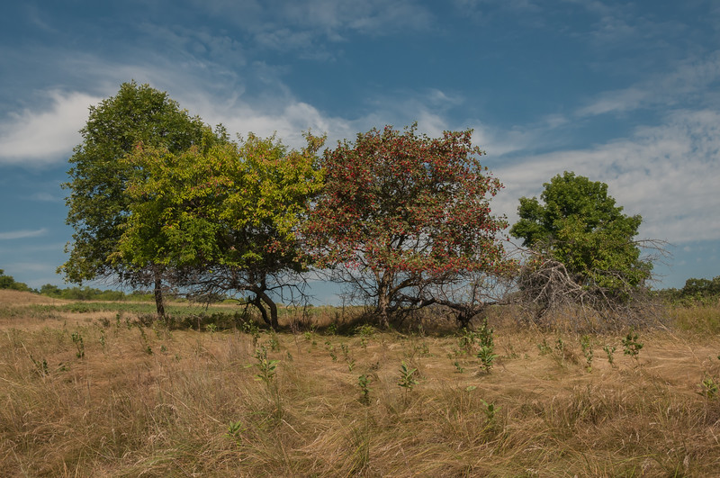 The end of summer brings fall color to a group of trees on the prairie