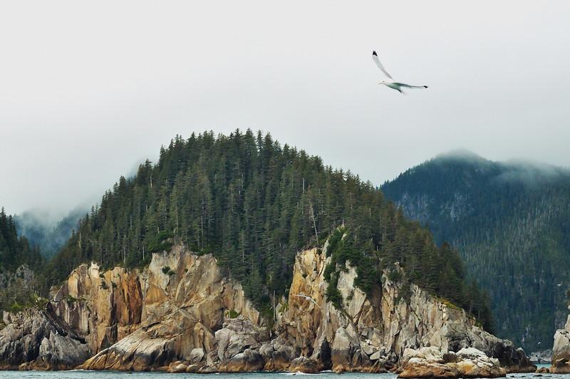 Glacier Bay Gulls