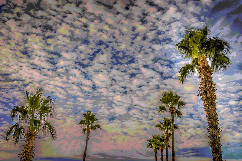 Dawn sky with palm trees
