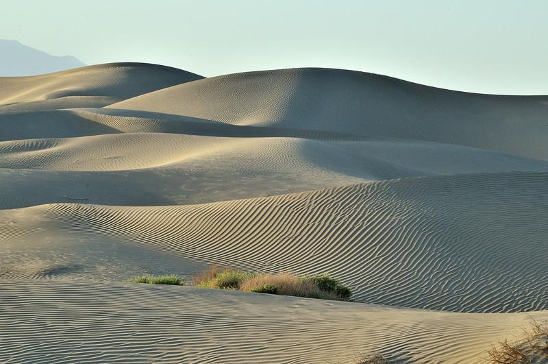 Silver Dunes