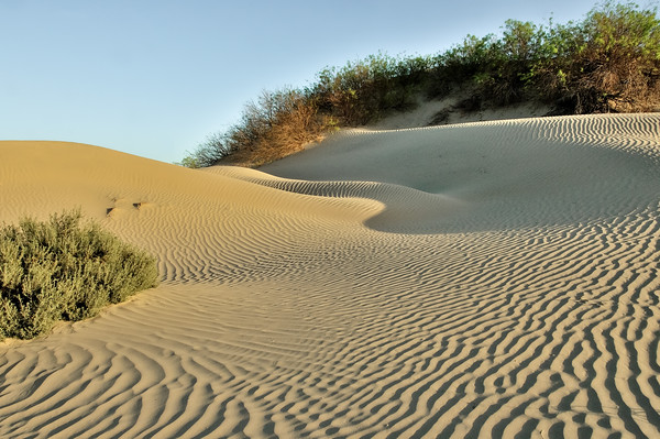 Wave patterns in a sandy dune framed by plants during late afternoon in Death Valley, California.