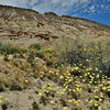 Hillside with Desert Dandelions