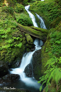 Stream in Olympic National Park Stream in the rainforest of the Olympic National Park, Washington