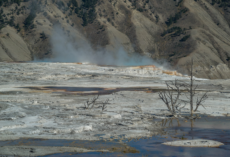 Destruction and color at Mammoth Hot Springs