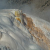 White and gold at Mammoth Hot Springs