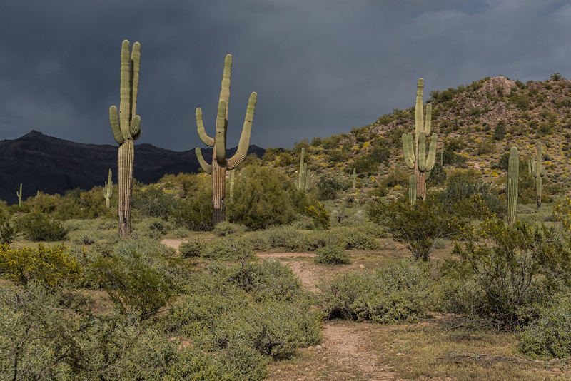 Before the storm, Superstition Mountains