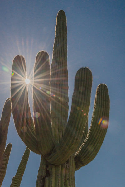 Saguaro sunshine