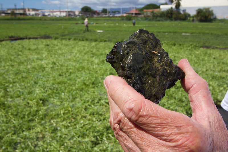 David Sumida shows how bugs can infiltrate the rocks in the fields.