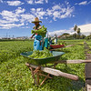 Sumida Watercress farm harvest