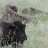 King of the Prairie