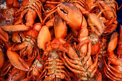 Canada Maritime Lobster