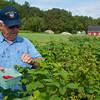 White Gables Organic Farm