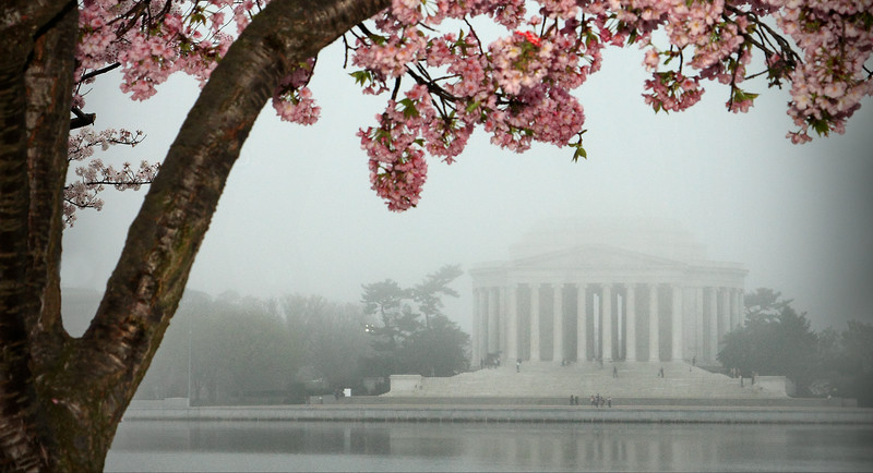 Foggy Blossoms