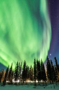 Aurora Borealis over trees, Yellowknife