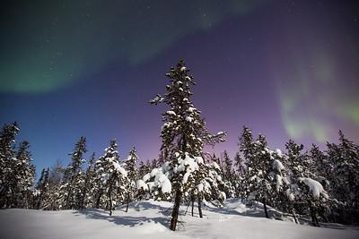 Aurora Nights VII, Yellowknife area, Northwest Territories.