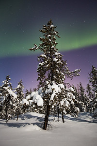 Aurora Nights V, Yellowknife area, Northwest Territories.