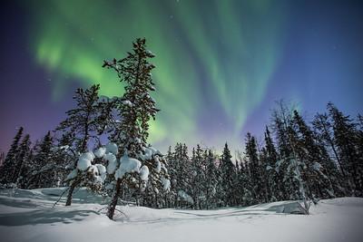 Aurora Nights I, Yellowknife area, Northwest Territories.
