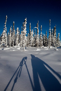 Snow covered trees and person's shadow below starry sky, Yellowknife.