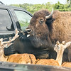 Port Clinton OH: African Safari
