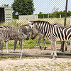Port Clinton OH: African Safari