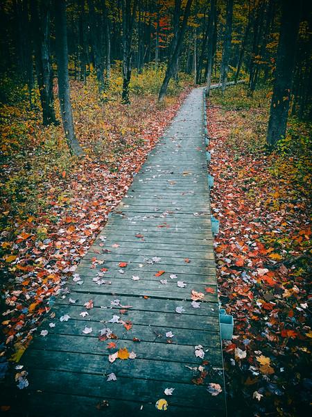 Metaphoric Trail
