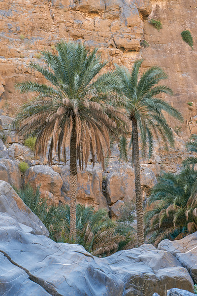 Riwaygh, Oman - december 2016