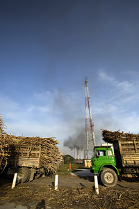 Cane trucks line up at the Belize Sugar Industry compound in the Orange Walk District.
