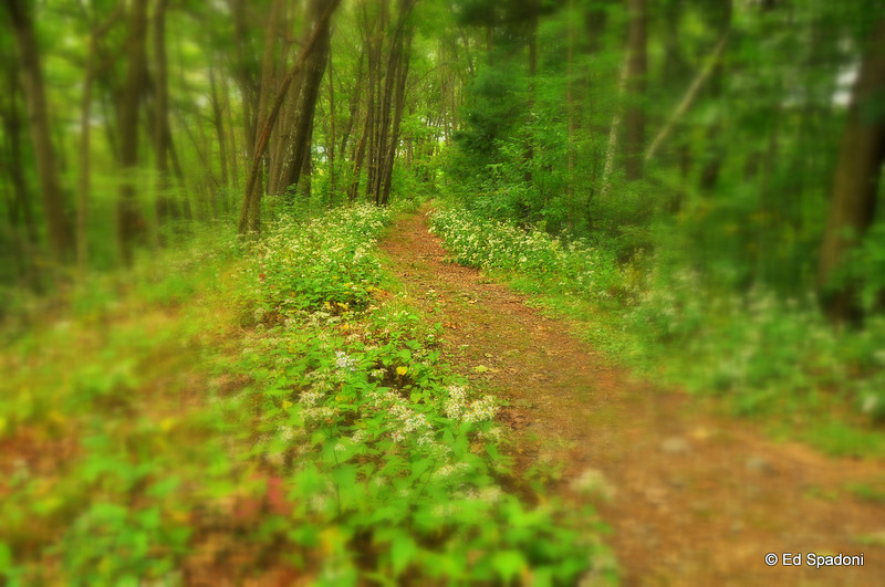 """""""Sometimes the path you're on is not as important as the direction you're heading"""".  ~Kevin Smith<br /> Pine Banks Park"""