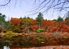 Across the pond<br /> Pine Banks Park
