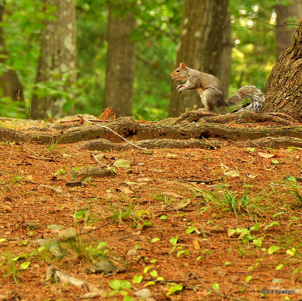 """""""Adopt the pace of nature:  her secret is patience"""".  ~Ralph Waldo Emerson<br /> Pine Banks Park"""