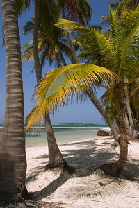 Coconut trees on the beach.