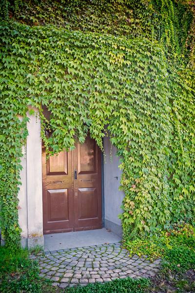 Vines grow over Museo Palatino doors