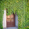 Vines grow over Museo Palatino doors