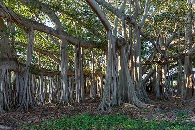 Edison Ford Winter Estates Botanicals
