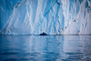 Whale and iceberg, Greenland