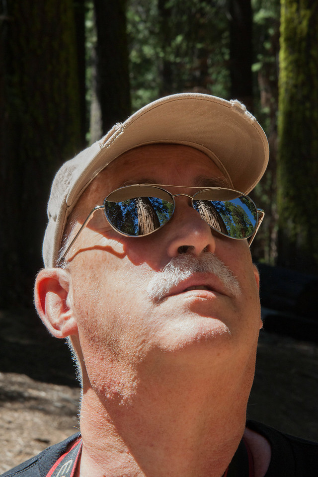Shiny Shades and the giant Sequoias