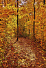 Forrest trail on the Oberg Mountain spur of the Superior Hiking Trail during peak color, #0483
