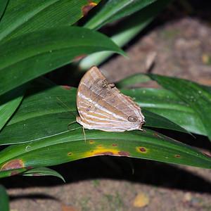 Alexandra Butterfly Trail