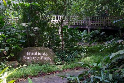 Hindhede Nature Park (Bukit Timah Nature Reserve)