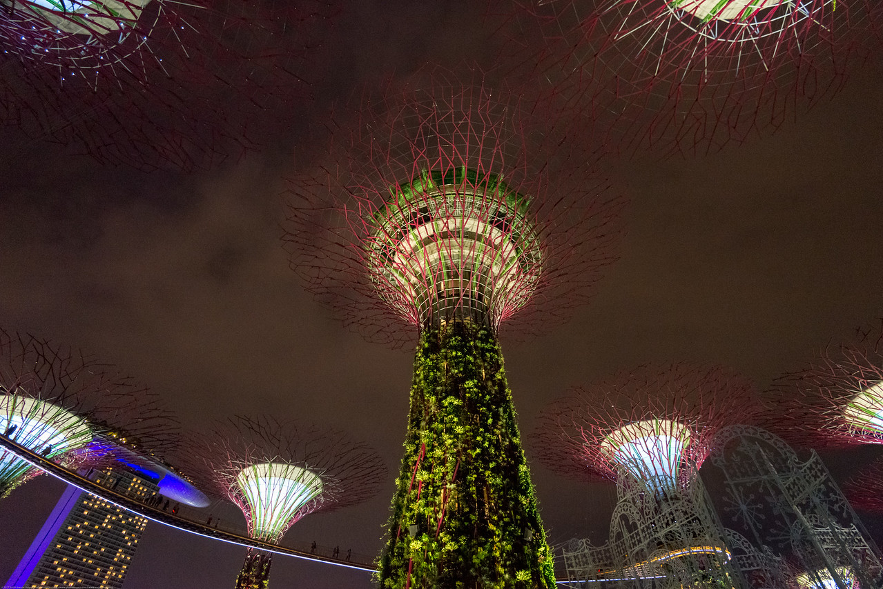 The Supertree Grove at Gardens by the Bay. Singapore. Seen the OCBC Skyway. A 128m-long aerial walkway offering close-up views of the 12 vertical gardens at Supertree Grove.