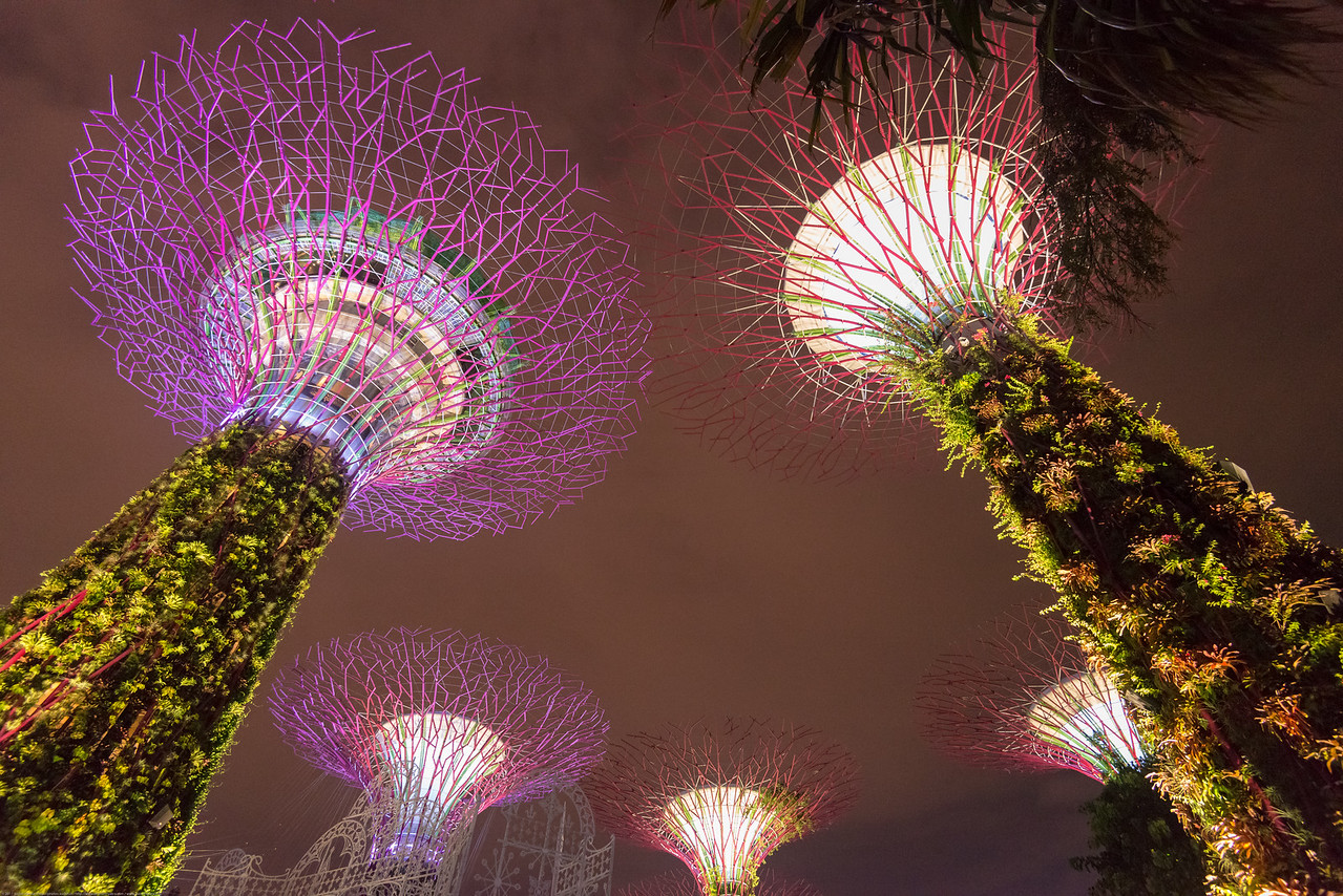 The Supertree Grove at Gardens by the Bay. Singapore