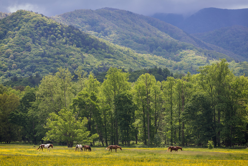 Cades Cove, Smoky Mountain National Park