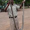 Holding an African Rock Python_